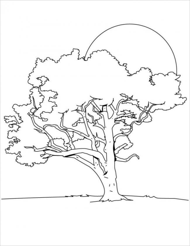 hình ảnh cây cốiđón nắng sớm buổi bình minh