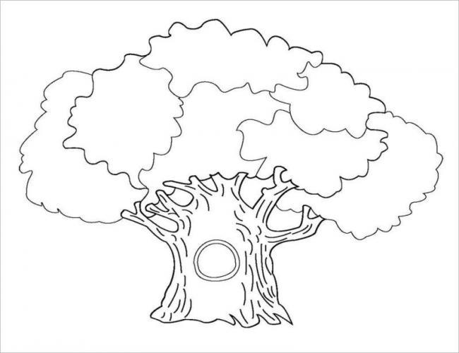 Hình ảnh cây sồi cổ thụ với thân câyto khổng lồ
