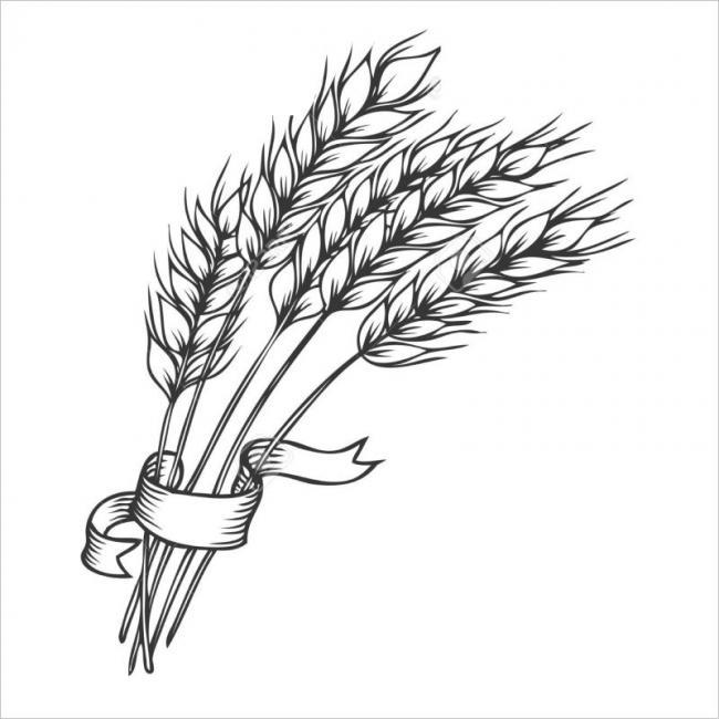 hình ảnh cây lúa mì nguyên liệu làm thành bột mì