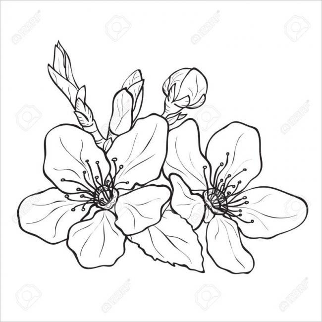 Hình ảnh bông hoa đào khi phóng to