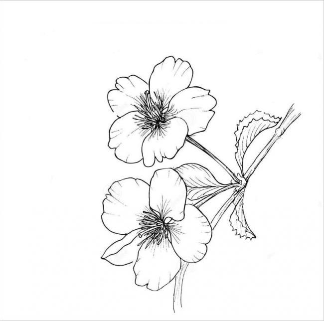 hình ảnh một cành hoa đàokhi nhìngần