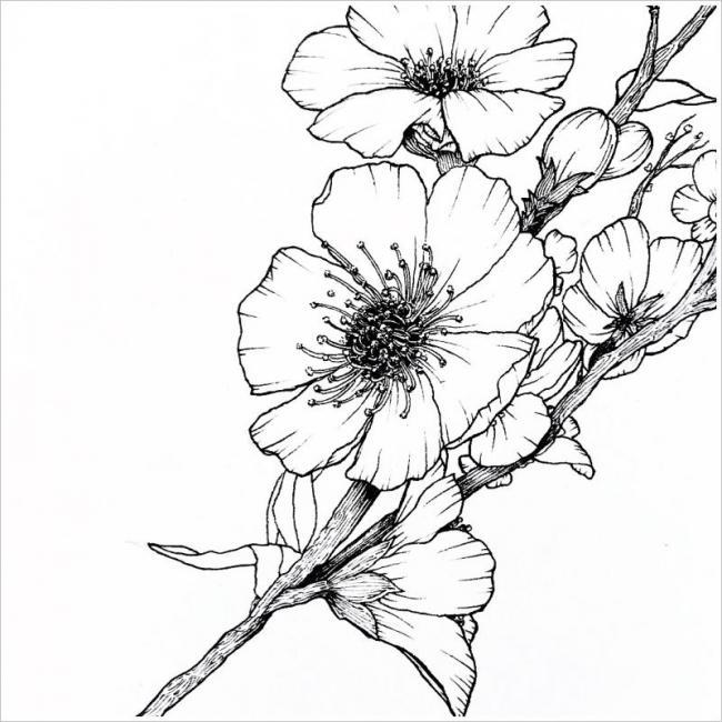hình ảnh những chùm hoa đào đua nhau khoe sắc