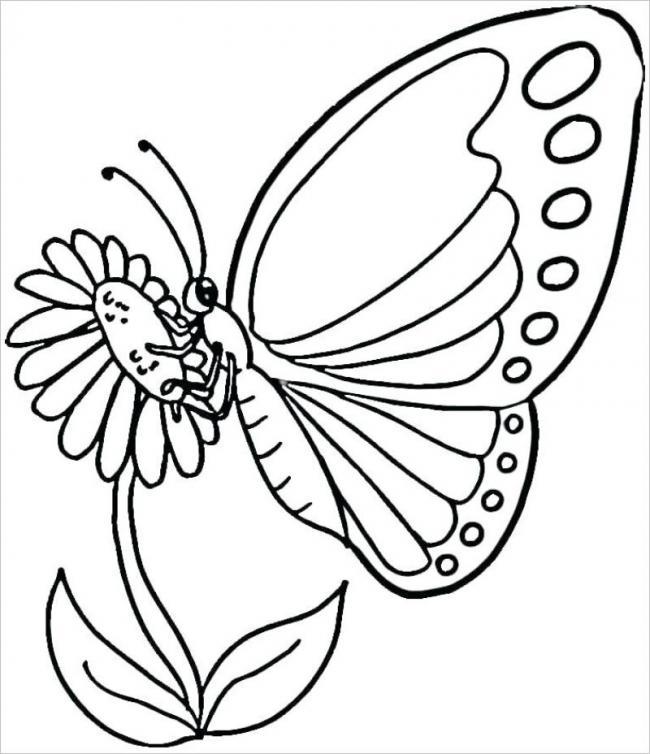 Hình ảnh bướm bên hoa hướng dương