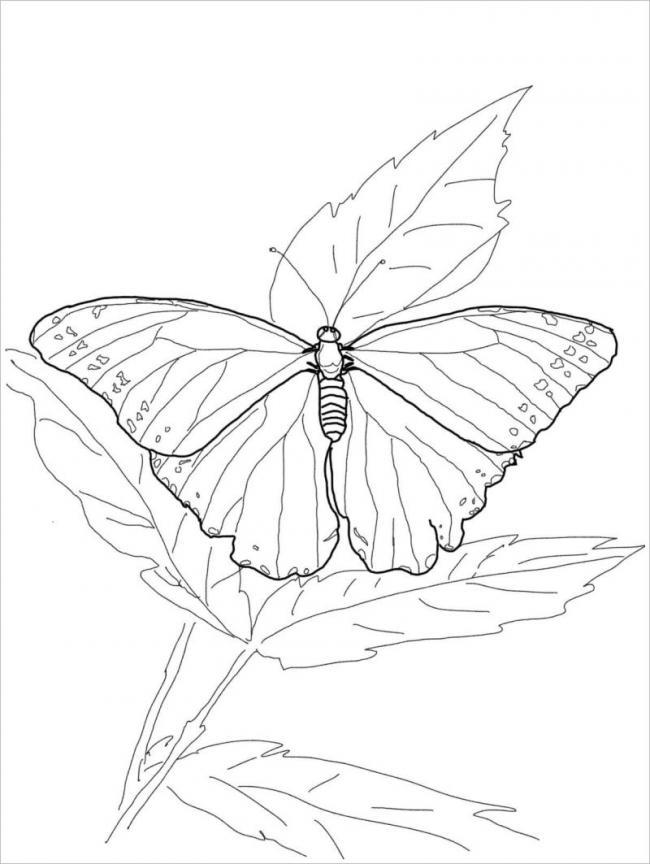 Bé tô màu chú bướm và cả chiếc lá nhé