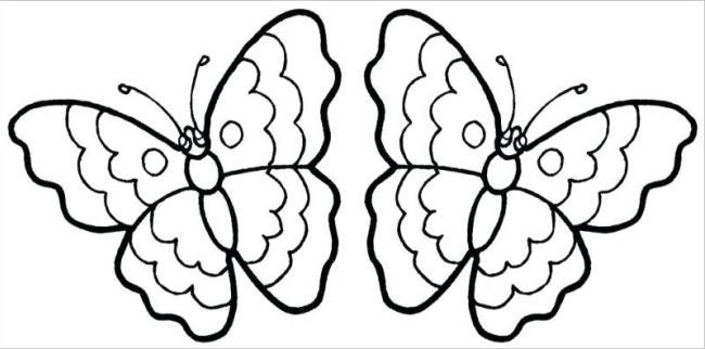 Hai bạn bướm song sinh nè