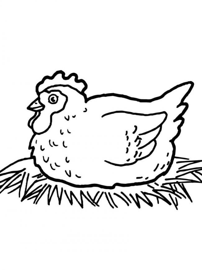 Bác gà mái mơ ấp trứng