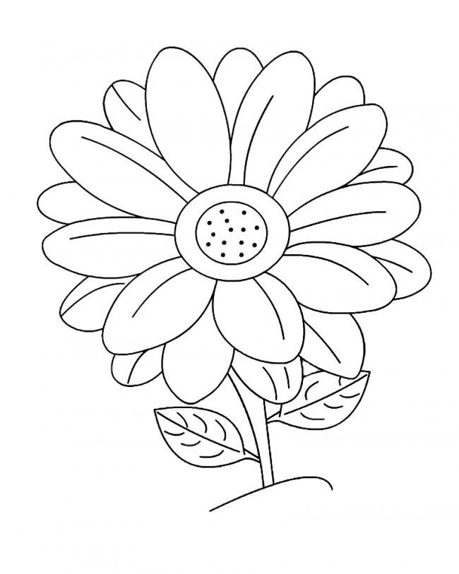 tranh tô màu bông hoa lớn