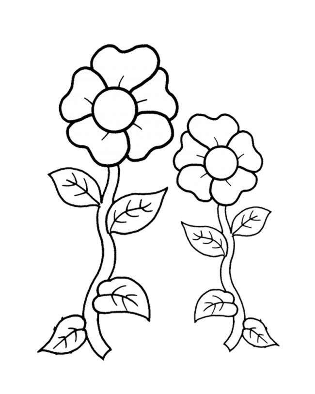 tranh tô màu cành hoa đối xứng
