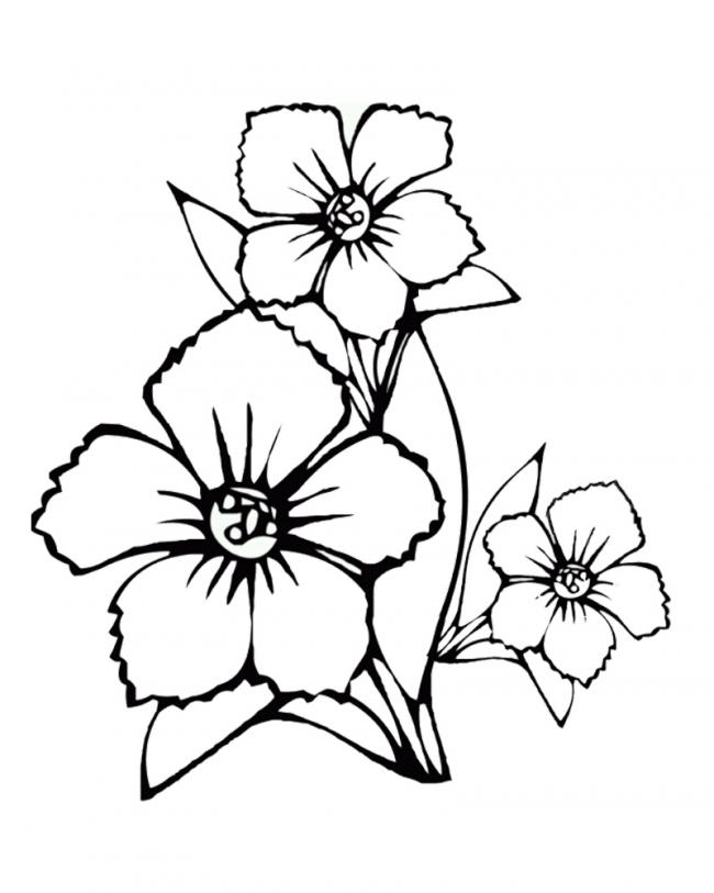 tranh tô màu cành hoa đẹp nhất