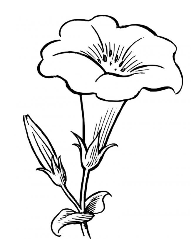 tranh to màu hoa loa kèn