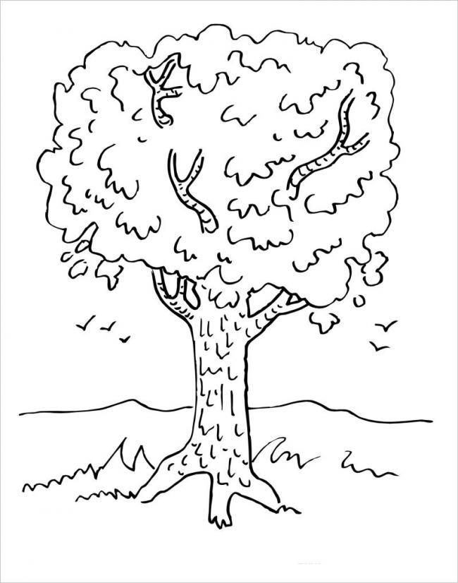 hình cây xanhum tùm những lá