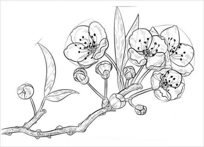 Hình ảnh chùm hoa mai với những nụ và lộc non