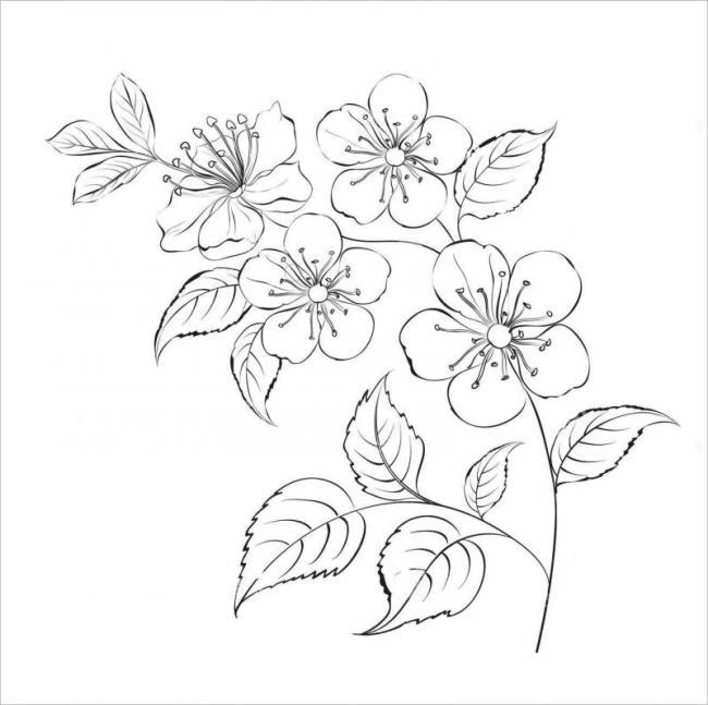 hình ảnh hoa mai - loài hoa đặc trưng của mùa xuân phương Nam