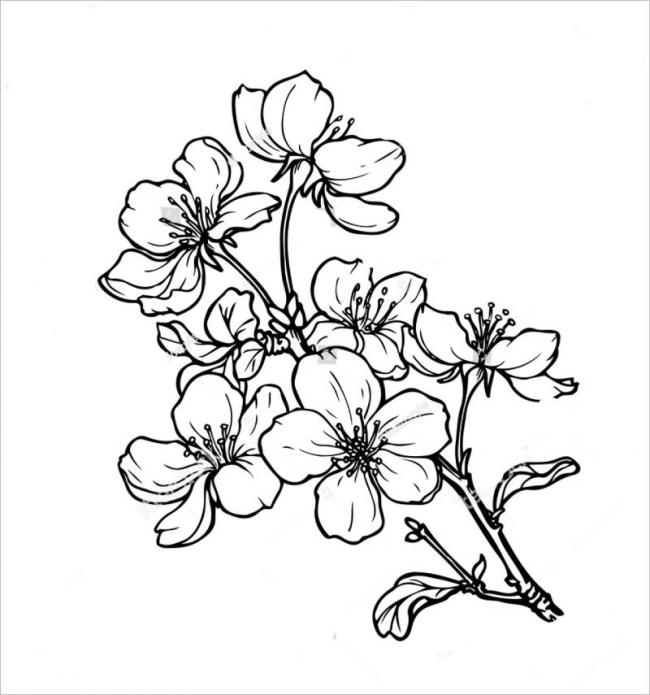 Hình ảnh hoa mai nở rộ khắp nơi mỗi khi xuân về