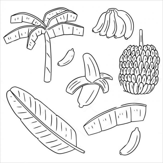 hình vẽ mô tả các bộ phận của cây chuối