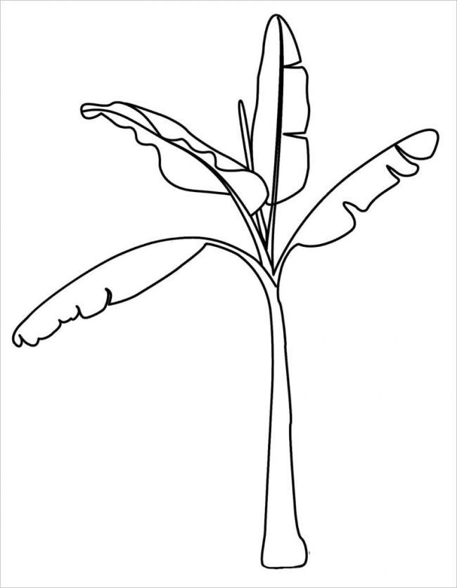 Bức vẽ cây chuối non đang trong thời kỳ phát triển