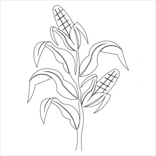 Hình vẽ cây bắp đơn giản nhất cho bé dễ tô