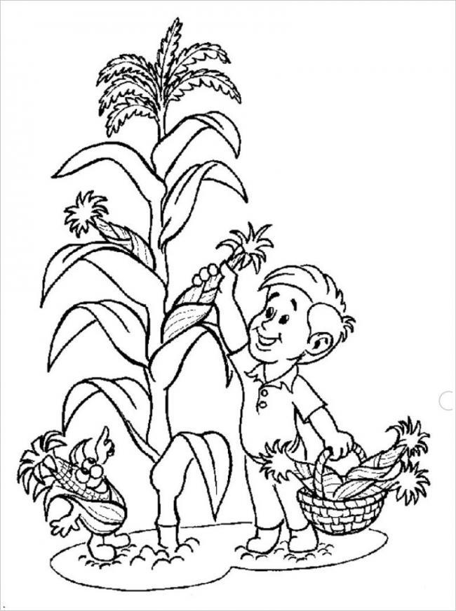 hình cậu bé giúp gia đình thu hoạch ngô