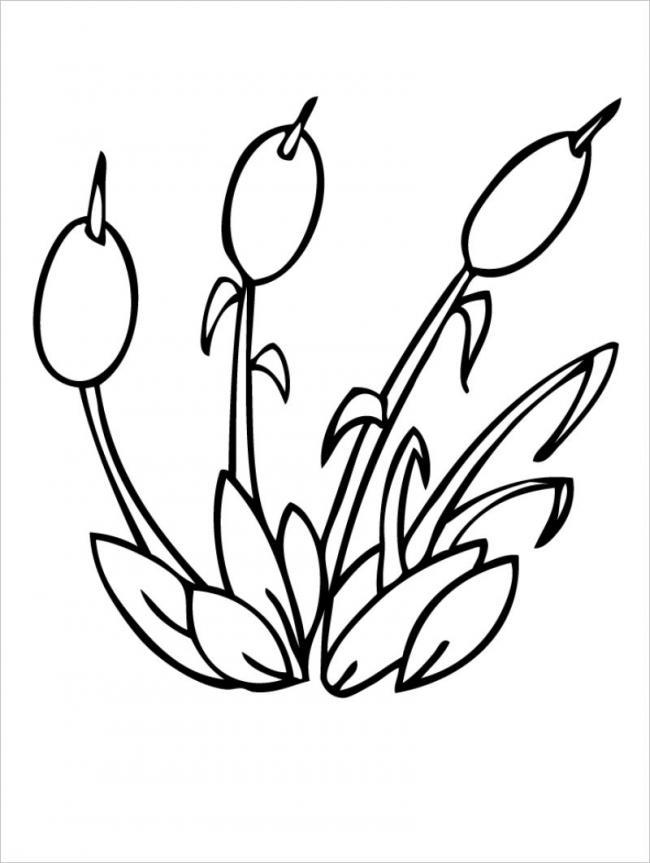 hình ảnh cây cỏ nến trong trí tưởng tượng của bé