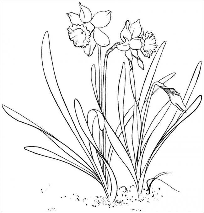 hình vẽ hoa và cỏ dại với nét đẹp riêng