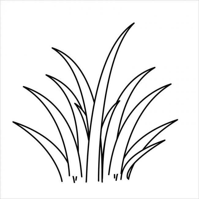 hình vẽ cây cỏ Lan Chi trồng làm cảnh