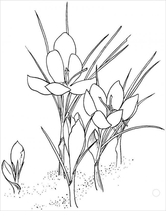 bức vẽ một loài hoa dại cùng khoe sắc với thiên nhiên