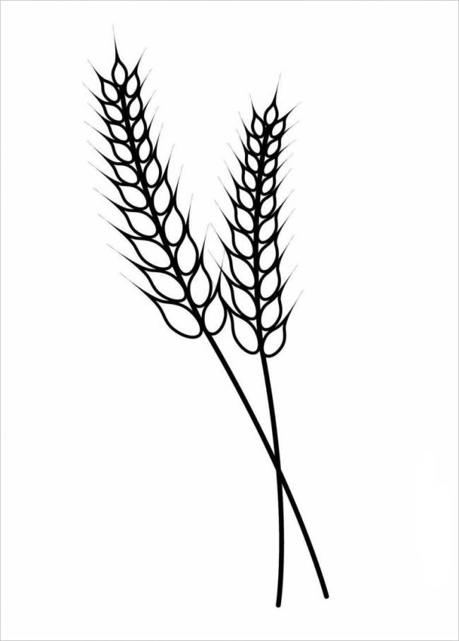 hình vé một loại cỏ có bông giống bông lúa mì