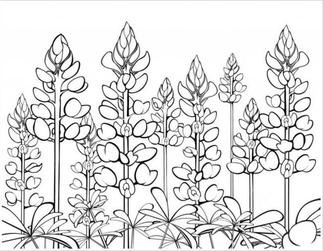 hình vẽ vẻ đẹp của những loại hoacỏ dại