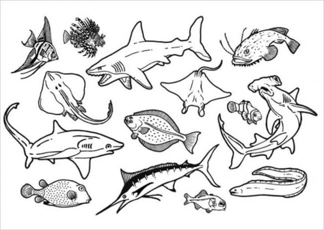Tổng hợp một số loài cá sống dưới biển