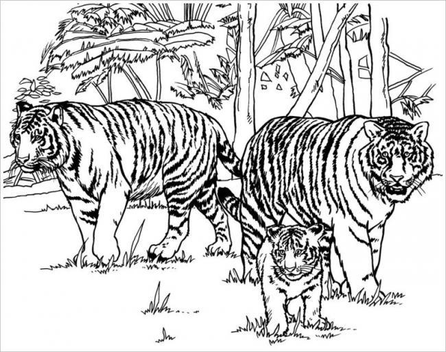 Cuộc sống của loài hổ trong rừng