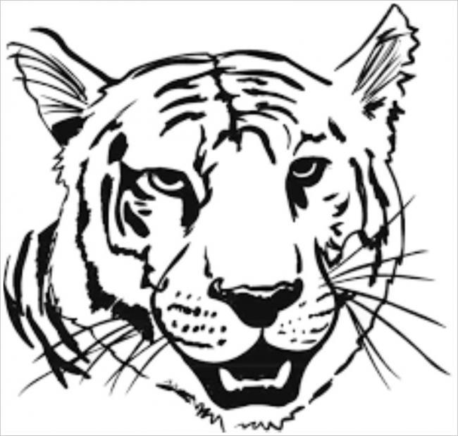 Cận cảnh khuôn mặt của hổ