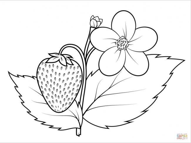 hoa dâu tây tô màu trắng