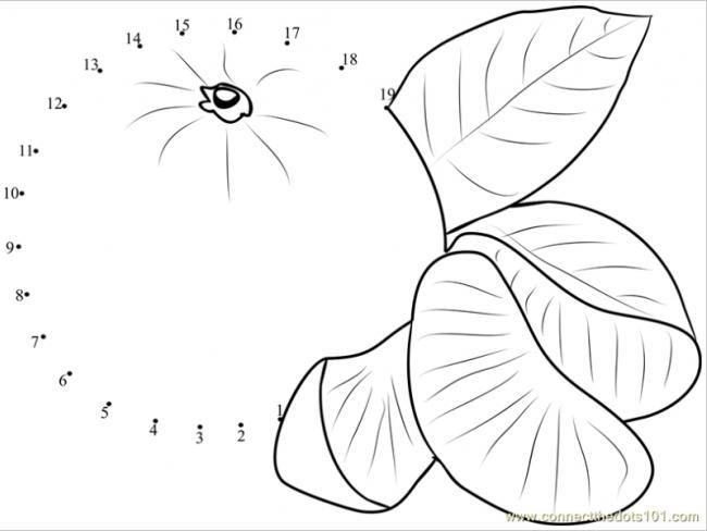 Tranh tô màu quả cam hướng dẫn bé cách vẽ từ phải qua trái