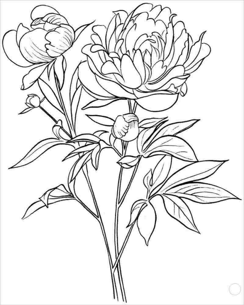 hình ảnh cây hoa mẫu đơn