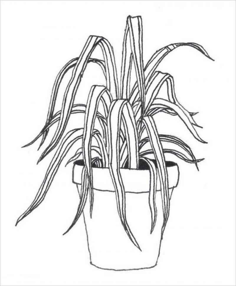 hình cây cỏ lan chi rất dễ trồng và chăm sóc