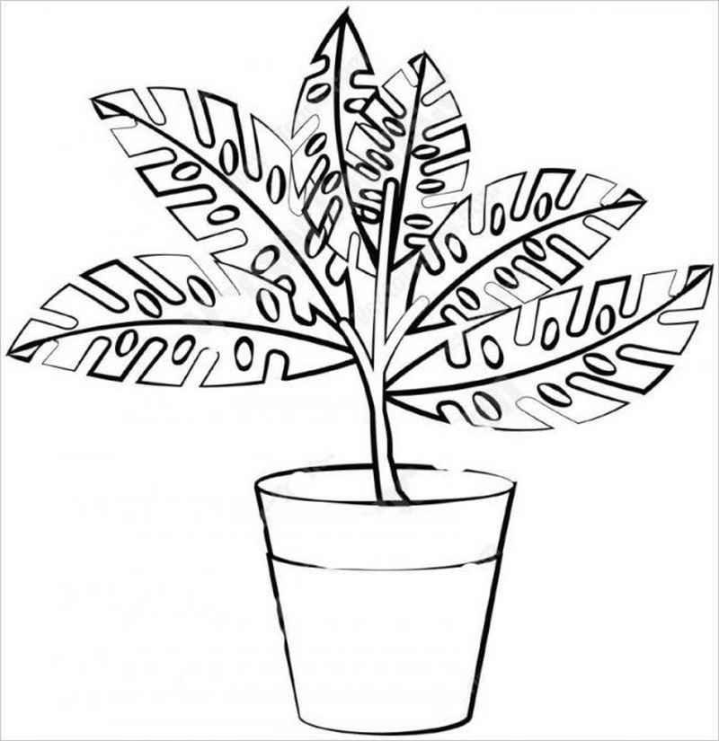 hình ảnh một loại cọ cảnh được trồng nhiều trong nhà