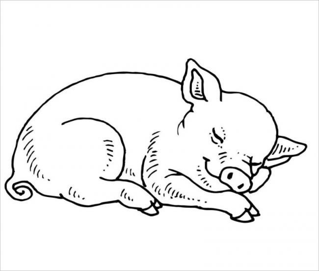Lợn con ngủ lười nè