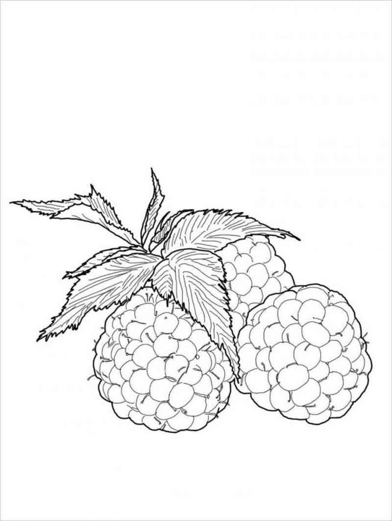 Hình trái dâu tằm khi chín có màu đỏ