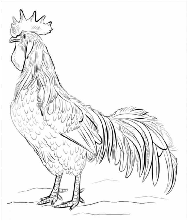 Hình ảnh tranh tô màu con gà tuổi Dậu