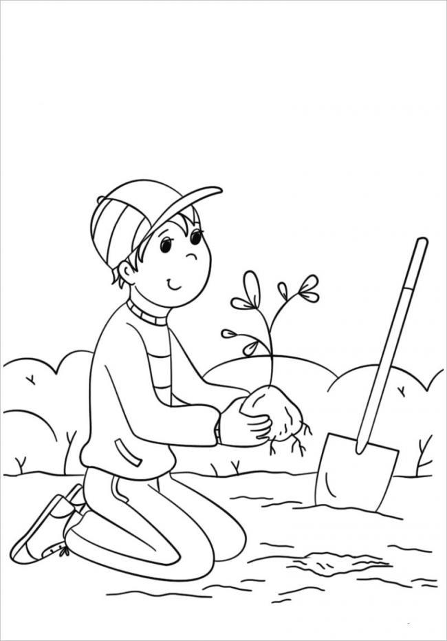 hình ảnh bé nâng niu từng gốc cây non đem trồng