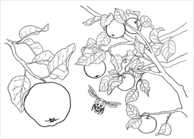 Hình ảnh cây táo mà các bé ít được thấy