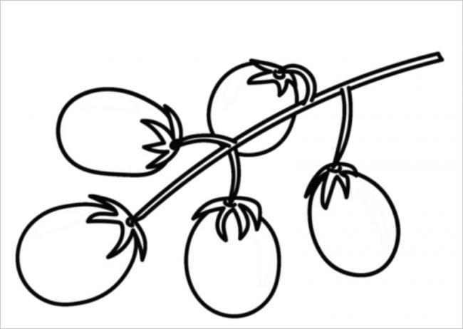 Cà chua bi rất ngon, thường dùng làm slad