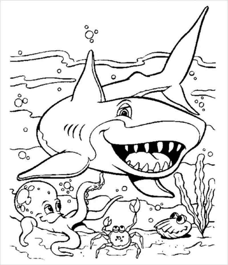 Cá mập sốn dưới biển