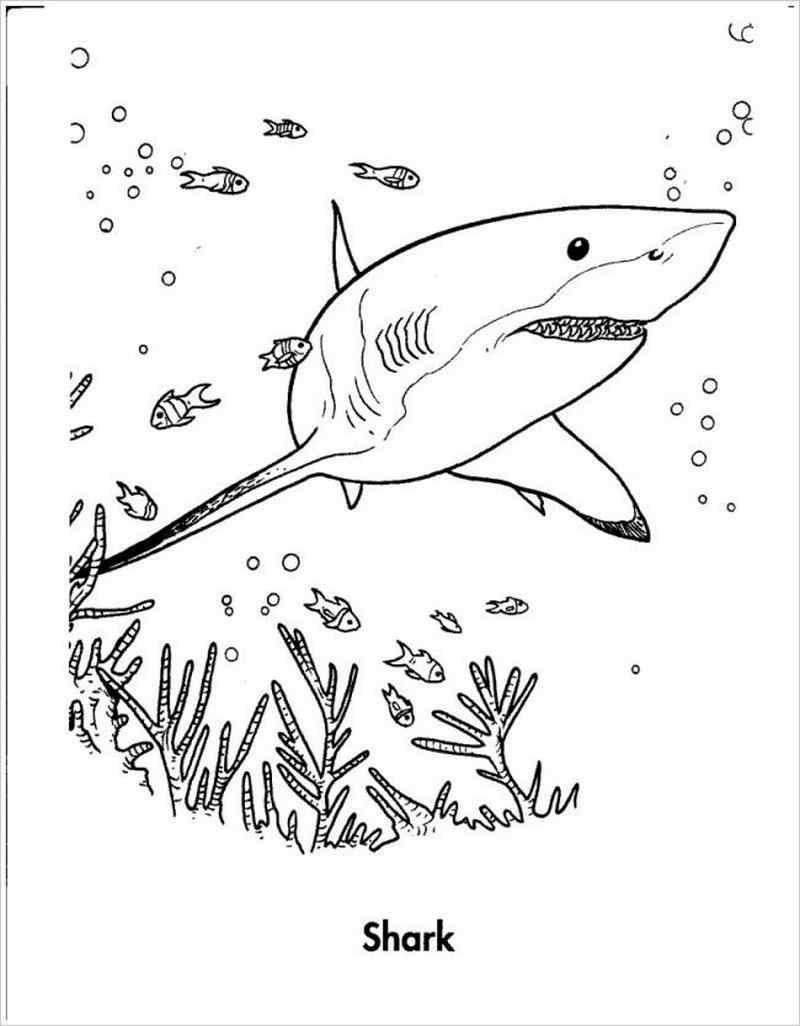 Hình ảnh cá mập to lớn