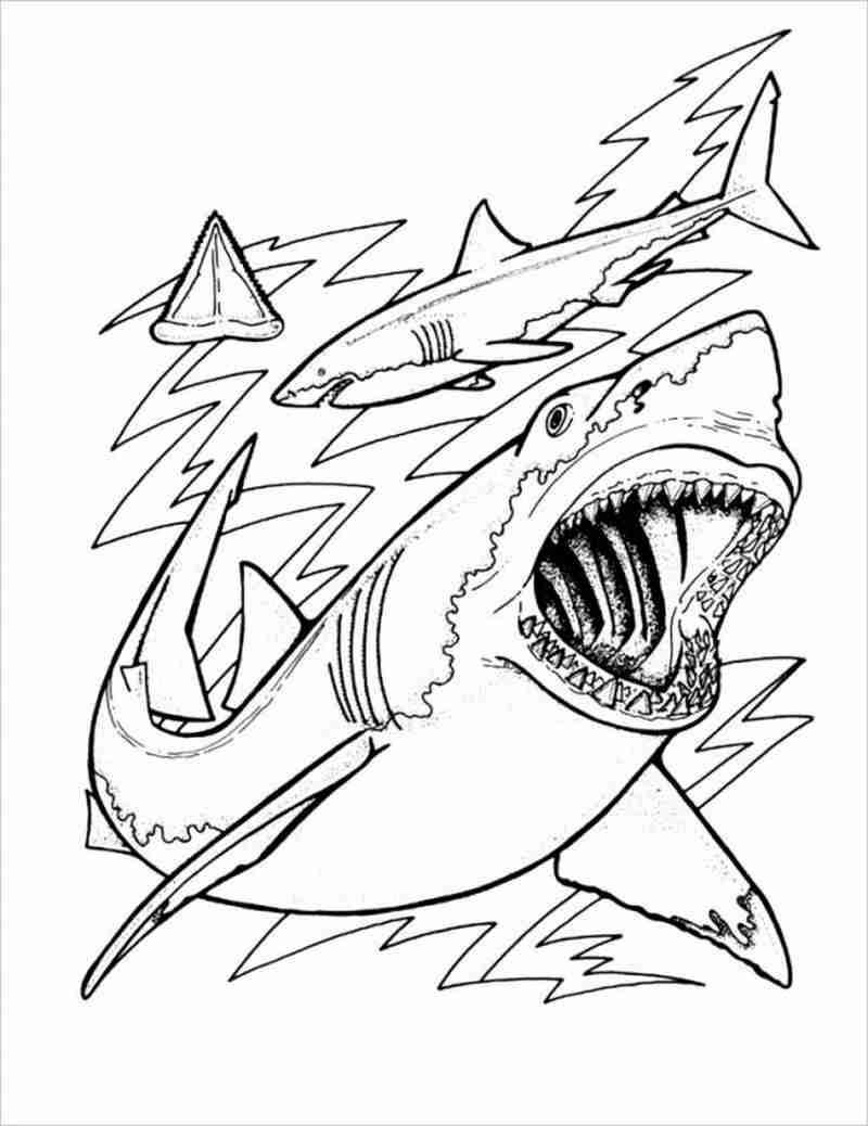Hình ảnh Một đàn cá mập