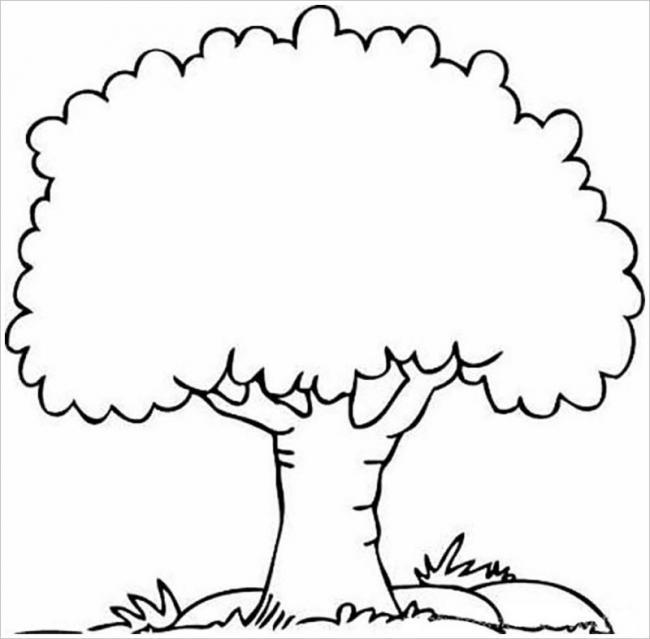 hình cái cây khi trưởng thành