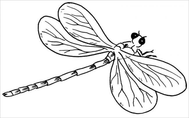 HÌnh ảnh chuồn chuồn với chiếc đuôi dài