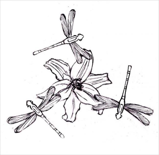 Hình ảnh chuồn chuồn bay vòng vòng
