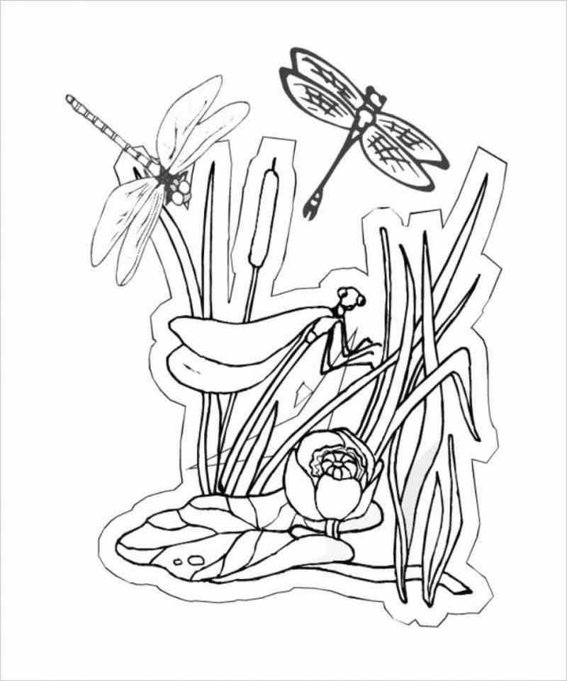 Hình ảnh Chuồn chuồn kim