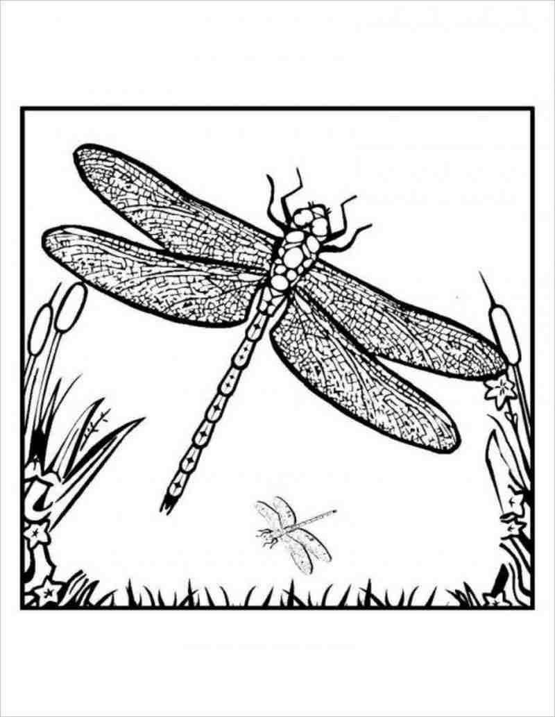 HÌnh ảnh Chuồn chuồn có đuôi dài